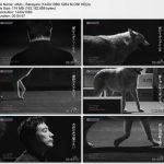 [MUSIC VIDEO] ウルフルズ – バカヤロー (2017.05.24/MP4/RAR)