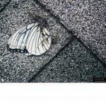 [Album] Syrup16g – delaidback (2017.11.08/AAC/RAR)