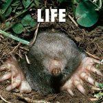 [Album] フジファブリック (Fujifabric) – LIFE (2014.09.03/FLAC 24bit Lossless/RAR)