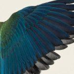 [Single] BBHF – 黒い翼の間を (2021.05.12/FLAC + MP3/RAR)